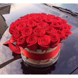 Trandafiri C109