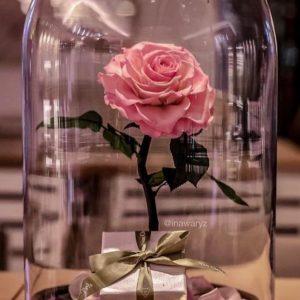 Trandafiri CR01