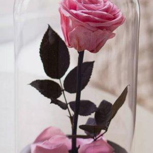 Trandafiri CR02