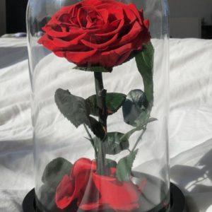 Trandafiri CR05