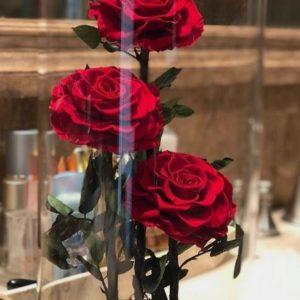 Trandafiri CR06
