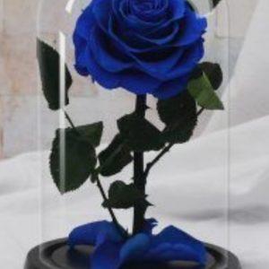 Trandafiri CR07