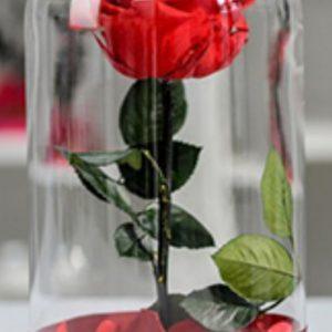 Trandafiri CR09